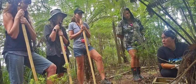 Opua Forest Traverse 11B