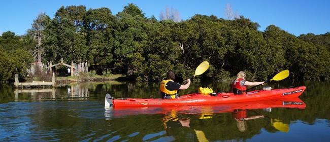Haruru Falls Kayak and Walk - Walk 12