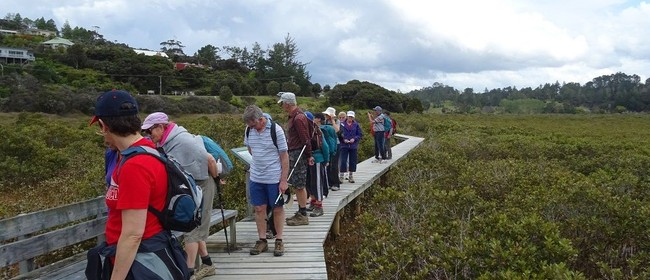 Okiato to Orongo Bay - Walk 1