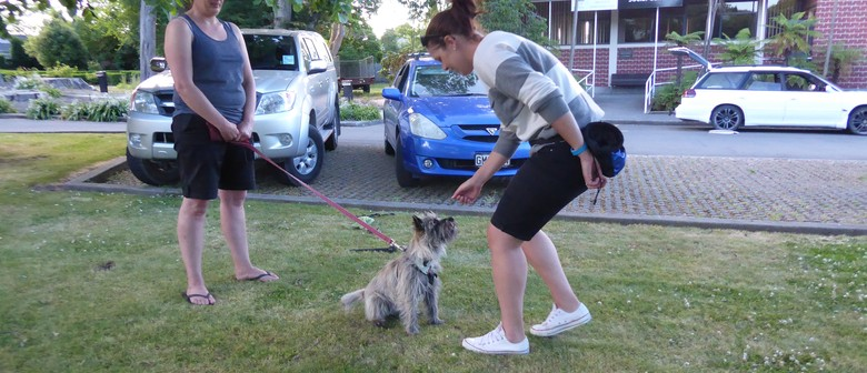 Indoor Dog Training - Life Skills Class for All Dogs
