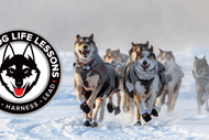 Image for event: Sled Dog Life Lessons