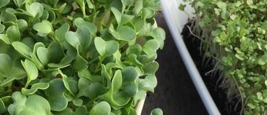 Growing Great Microgreens