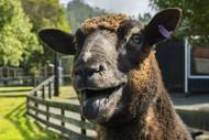 Image for event: Sheepworld July Special