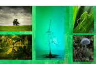 Image for event: Wall Of Green Photographic Exhibition