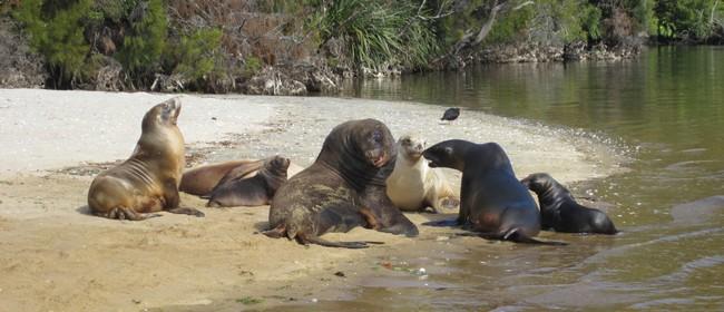 New Zealand Sea Lions of Stewart Island