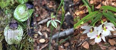 MEG Winter Lecture Series - Carlos Lehnebach: Native Orchids