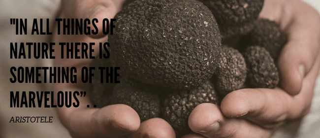 Truffle Festival Dinner with Amuri Truffiere: CANCELLED
