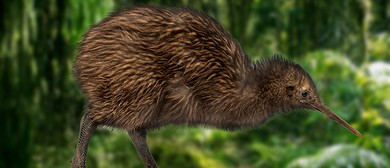 Save Kiwi: Local Stories