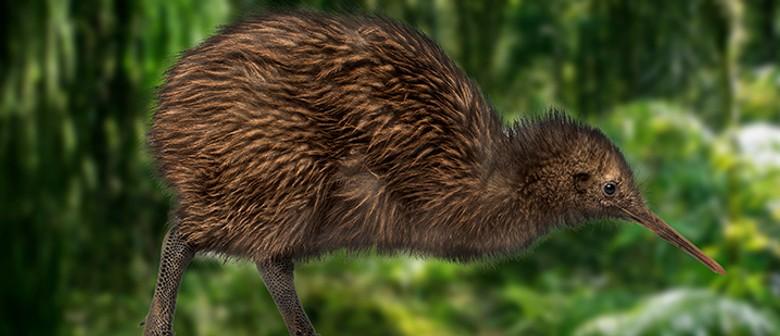 Save Kiwi: Local Stories