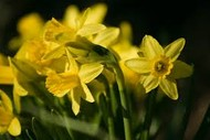 Image for event: Marlborough Horticultural Society Spring Show