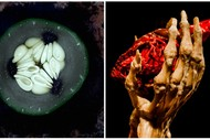 Image for event: The Seeds of Time & The Beauty of the Human Body