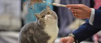 Canterbury Allbreeds Cat Club Show