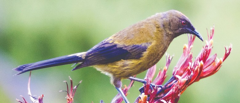 NZ Biodiversity Strategy - Napier Workshop