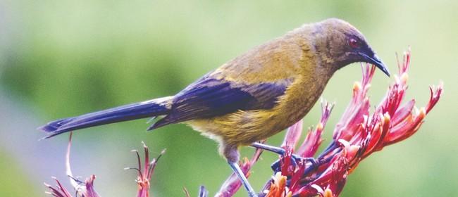 NZ Biodiversity Strategy - Wellington Workshop