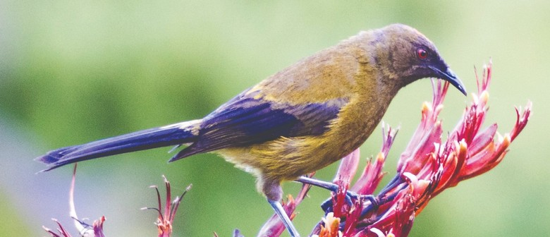 NZ Biodiversity Strategy - Taranaki Workshop