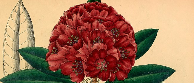 Botanical Art & Illustration Course