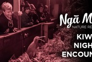Image for event: Kiwi Night Encounter