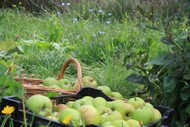 Image for event: The Happy, Healthy Fruit Tree Workshop