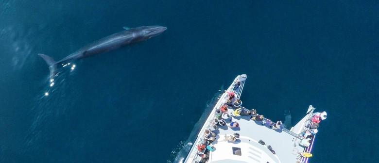 Love Omaru Stream Fundraiser - Auckland Whale & Dolphin Safa