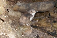 Image for event: Western Bay Wildlife Trust Guided Night Tour