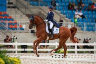 Image for event: CD Dressage