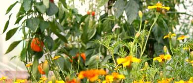 The Organic Greenhouse