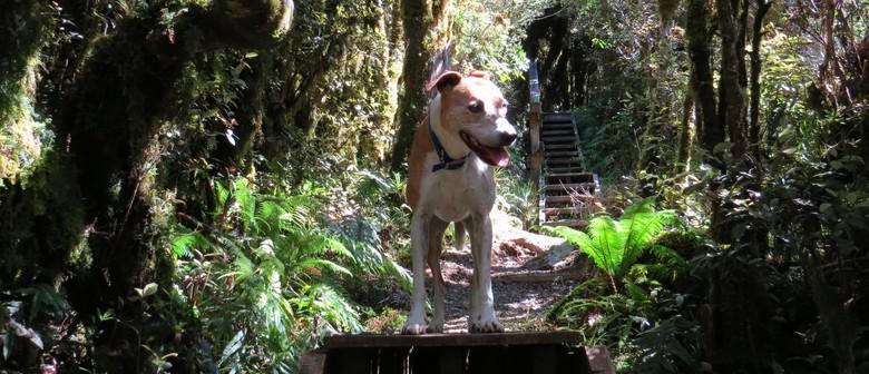 Kiwi Aversion Training for Dogs