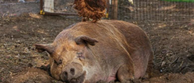 NZIFF - The Biggest Little Farm