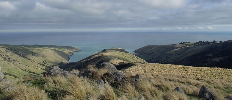 12 Explore Te Oka Reserve