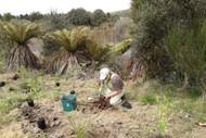 Image for event: Lets Get Planting!
