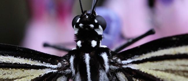 Photography Field Trip for Women - Butterfly Creek