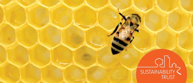 Bee Friendly Fun for The Whole Family