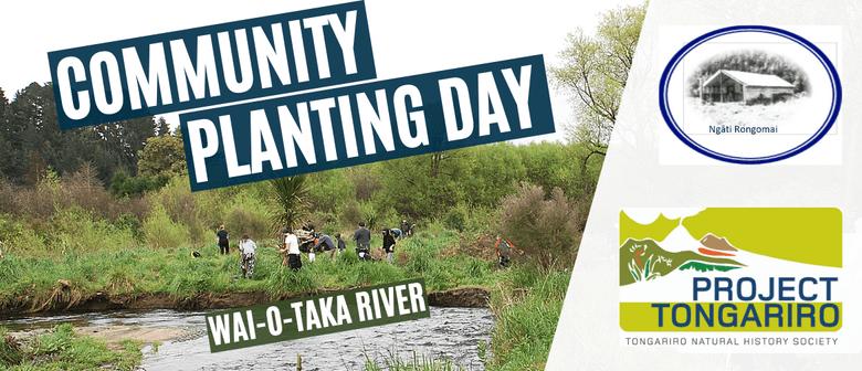 Wai-o-taka River Community Planting