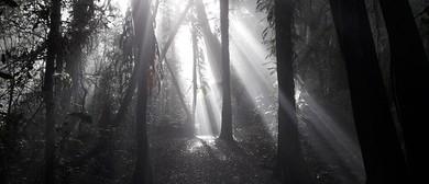 Meditation On the Maunga
