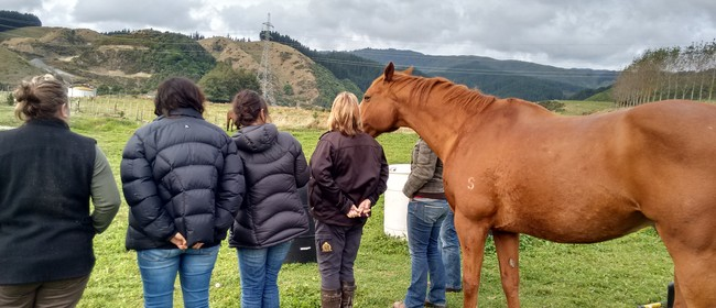Professional Equine Supported Therapy Training Workshop