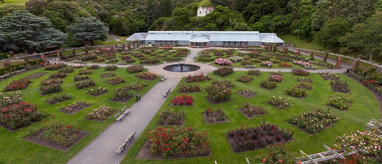 Guided Walk: The Lady Norwood Rose Garden