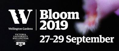 Bloom 2019 Concerts