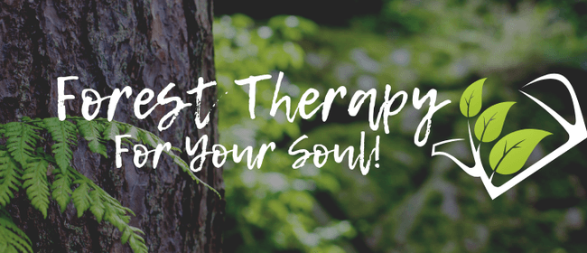 Forest Therapy For Your Soul!