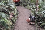 Image for event: Caring for Our Kauri Forest