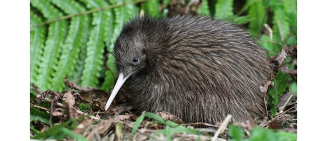 Kiwi Creche Kleen Up