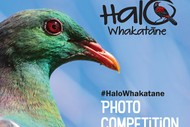 Image for event: Halo Whakatane Kid's Photography Competition
