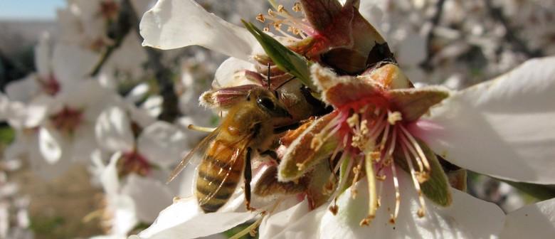 Film Screening: More Than Honey