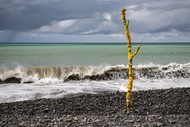 Image for event: Beached Forest; Interactive Art Installation by Susan Mabin