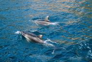 Image for event: Conservation Week - Hauturu Snorkel Days