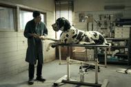 Image for event: Italian Film Festival - Dogman