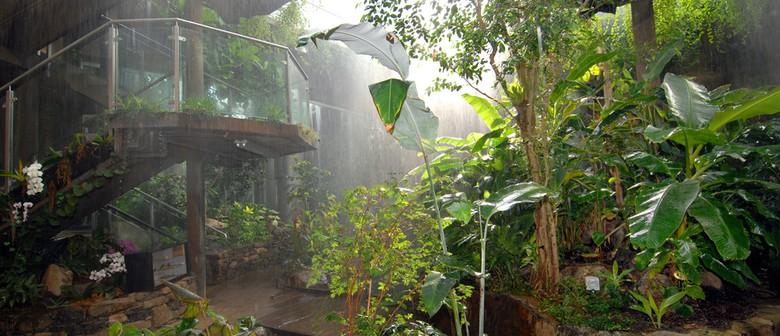 No Rain, No Rainforest