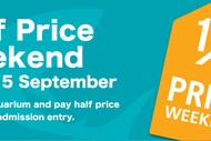 Image for event: Half Price Weekend - National Aquarium of New Zealand