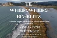 Image for event: Te Wherowhero Lagoon Bioblitz