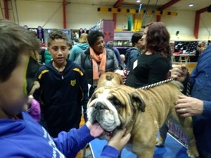 Wellington Pet & Animal Expo 2019 - Porirua - Mana - Eventfinda