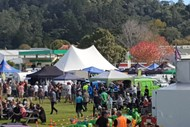 Image for event: Coromandel Town Seafood Fest